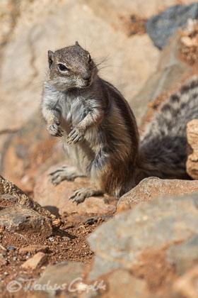 Die Tierwelt auf Fuerteventura